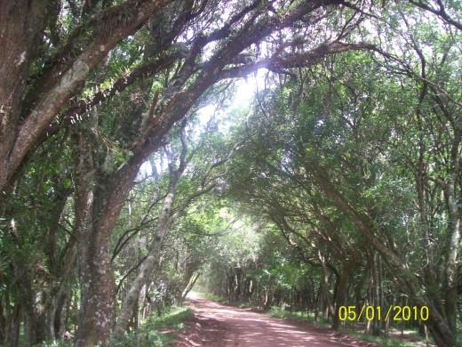 Fonte: www.sistur.rs.gov.br