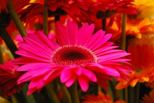 Flor símbolo do município.